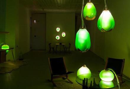 lampade-alghe