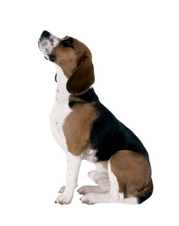 chien-martin-assis-profil.jpg
