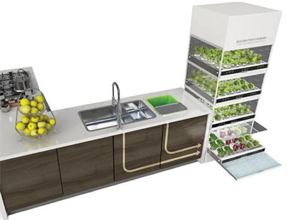 Un orto in cucina - Invasione di formiche in cucina ...