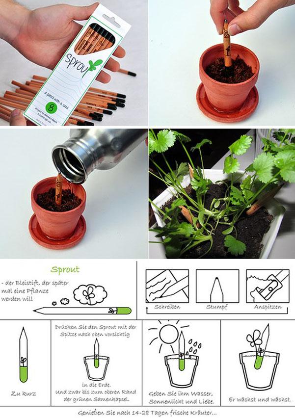 matita pianta Sprout