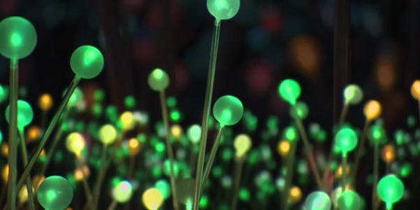 Bruce Munro Fields of Light