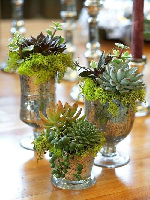 Idee decor piante grasse for Piante decorative