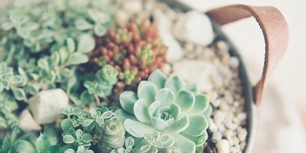 Idee decor piante grasse