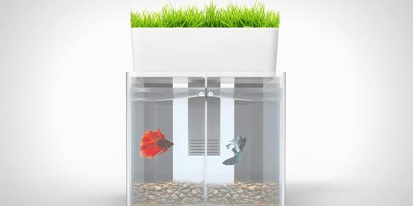 duo acquario con giardino