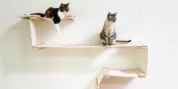 cat-mod